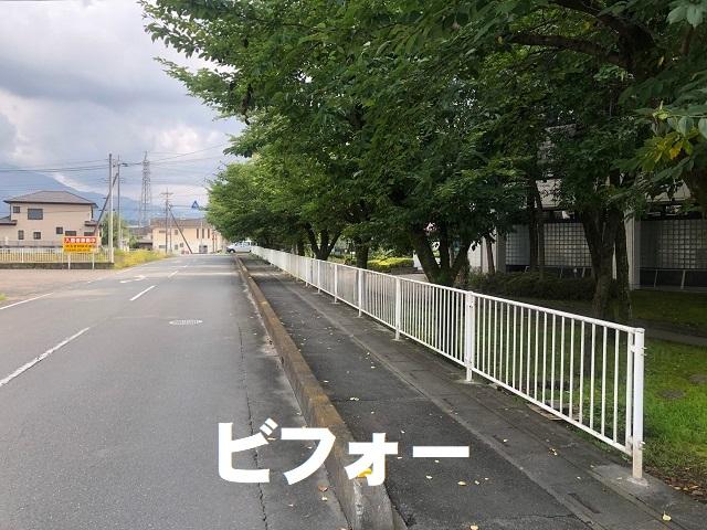 桜の枝伐採前 (1).jpg