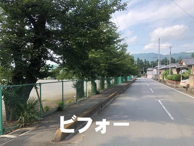 桜の枝伐採前 (2).jpg