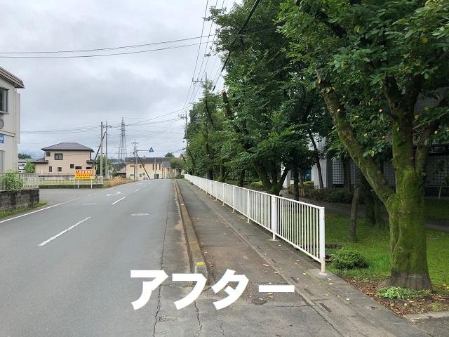 桜の枝伐採後.jpg