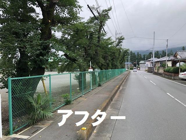 桜の枝伐採後 (2).jpg